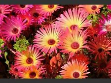 Dry Medium 7 (15 to - ° C) Plants, Seeds & Bulbs