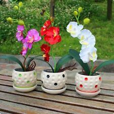 Mixed 200 pcs/Bag Phalaenopsis Orchid Seeds Flower Sementes Indoor Balcony