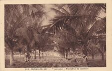 CPA COCHINCHINE THUDAUMOT PLANTATION DE COCOTIERS