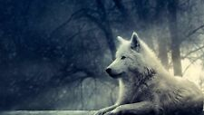 "Snow Wolf Canvas Matte Print 23"" x 33"""