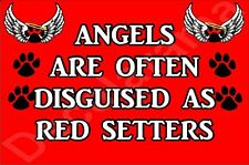 ANGELS ARE OFTEN DISGUISED AS RED SETTERS Dog Novelty Fridge Magnet Ideal Gift