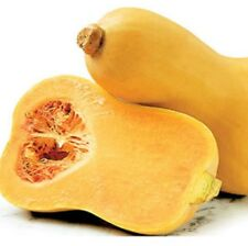 BUTTERNUT Pumpkin cucurbita pear-shaped vegetable plants - 4cell seedling punnet