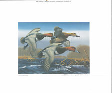 1987 Federal Duck Stamp RW54 Redheads Painting Print by Arthur Anderson