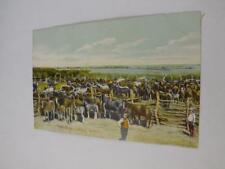 HORSES ON A RANCH POSTCARD CANADA FARMING