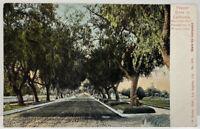 Pepper Drive CALIFORNIA Maringo Ave PASADENA WINTER SCENE Photo Postcard