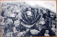 Multiple Baby 1903 Postcard - Babies in a Cabbage Patch - French Fantasy