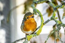 Wildlife Hospital Charity Christmas Xmas Cards - Perched Robin – pack of 10 New
