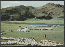 Монголия Открытка Природа Овцы 1985г.