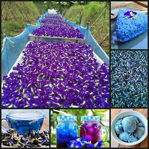 DRIED BUTTERFLY BLUE PEA Pure Natural Organic Flowers Clitoria Ternatea Healthy