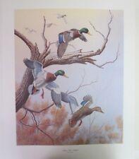 "Dave Chapple ""Autumn Mist - Mallards"" / Ltd. Edition Art Print 55/350 - 1984"