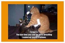 2x3 FRIDGE MAGNET FUNNY SILLY CAT LOVER HUMOR Wrestling Had 8 Kittens