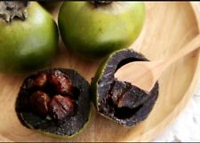 Diospyros mollis 5 seeds Ebony tree Very RARE Herb and Useful plant Black 2018