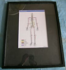 New listing Underskin, by Sam Loman, human chart, Medicine