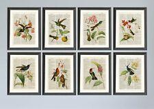 Antique Book page Art Print - Set of 8 Hummingbirds Antique Dictionary Art