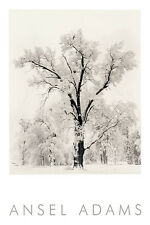 Oak Tree, Snowstorm (embossed) by Ansel Adams Art Print Photo Poster 36x24