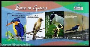 Malachite Kingfisher, Bulbul, Night Heron, Birds of Gambia 2009 MNH SS