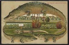 Vintage Unused Alligator Border Postcard Big Joe  Jacksonville Fl S595