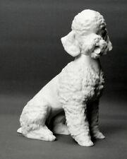 "Porcelana figura, ""caniche"", alboth & Kaiser,"
