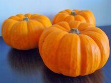Pumpkin MUNCHKIN-Pumpkin Seeds-TASTY MINI FRUITS-15 SEEDS.