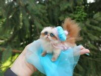 Persian kitten Cat Felted Realistic Miniature Sculpture Pet by Yana Fedorova