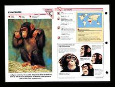 Chimpanzee Wildlife Fact File Mammals Animal Card Home School Study 1.16