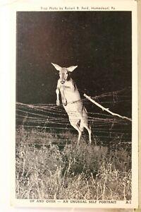 Pennsylvania PA Homestead Deer Self Portrait Postcard Old Vintage Card View Post