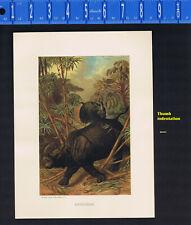 Rhinoceros - 1898 Prang-Wood Chromolithograph