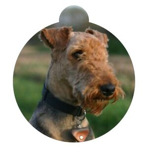 Airedale Terrier Breed Picture Pet ID tag