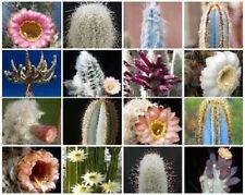 Columnar cacti MIX @@ outdoor rare cactus seed 50 SEEDS