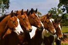 Best Friends by Robert Dawson Horses Print 19x13