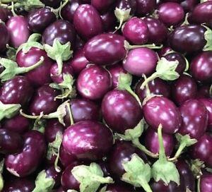 50 SEEDS SMALL ROUND PURPLE EGGPLANT/THAI EGGPLANT NON GMO FRESH 2021 SEEDS