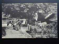 Wiltshire Figheldean THE SMITHY Blacksmith Under the Chestnut Tree Old Postcard