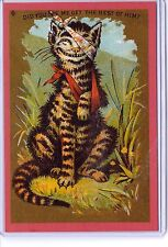 Vintage 1910 Beat Up Kitty Cat 1991 Repro Reproduction Postcard #1608