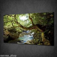 DEEP FOREST RIVER TREE MODERN WALL ART CANVAS PRINT PICTURE READY TO HANG