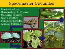 Organic Spacemaster Cucumber Seed 20ct Grown & selected in the USA 2018