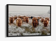 HERD HIGHLAND COWS 1-DEEP FLOATER/FLOAT EFFECT FRAMED CANVAS WALL ART PRINT