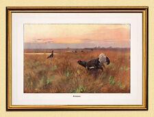 Immagine caccia Birkhahn Balz Gallina Fagiano uccelli canoni fac simili 473 nel quadro oro