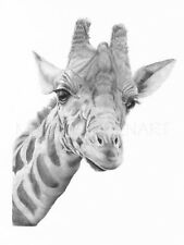 GIRAFFE ART PRINT Pencil Drawing Wildlife Animal Sketch A4 Wall Art Signed