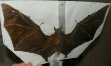 SPREAD WINGS CYNOPTERUS MINUTUS REAL BAT INDONESIA TAXIDERMY