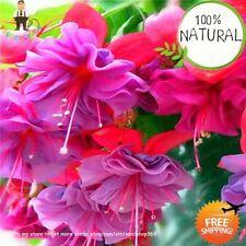 Bag Mini Bonsai Seeds Plants Fuchsia Hanging Flower Autumn A Garden 100pcs