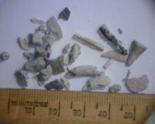 Boxed Fossil Amphibian Bone Fragments Permian Period (3 in each box) 298-252 MYO