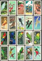 1964 Brooke Bond Tropical Birds Trading Cards Complete Set of 48