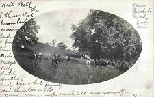 Cows Graze in a Field Adjacent to the Barn, Middletown NY 1907 RPPC
