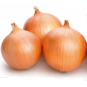 50 Dutch Giant Brown Onion Seeds Easy Peel Rijnsburger Vegetable Seed Pack