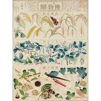 Kato Chikusai Species of Flora Fauna Insects Japanese Canvas Wall Art Print