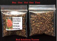 Buy 1 Get 1 Free Red Achilleas Yarrow Flower Way Over 400 Seeds 4 U