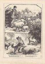 COLLIE DOG HERDING SHEEP FLOCK LAMB SHEPHERD FARM ANIMALS ANTIQUE PRINT