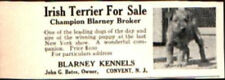 1912 Irish Terrier Dog Blarney Kennels Convent Nj Vintage Print Ad 763
