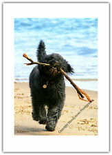 Dog Labradoodle Pet Beach Stick Games - Greetings Card Birthday / Blank Notelet