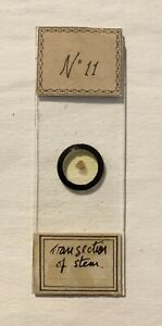 Antique Microscope Slide - Trans Section of Stem. Plant Botany